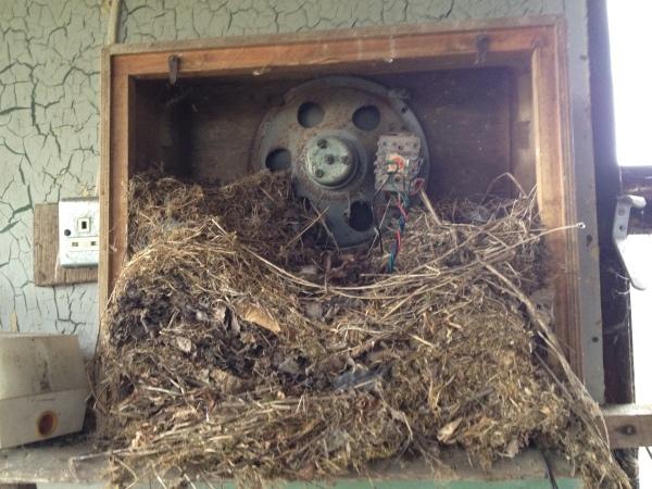 birds nest in a vintage radio